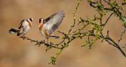 oiseaux1